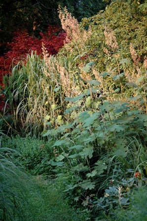 fs-garden-joe-pye-weed-and-miscanthus-resized.jpg