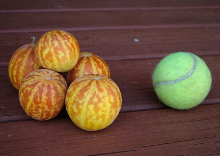 Pocket melons with tennis ball