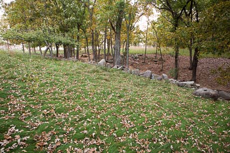 Neil's lawn with leaves