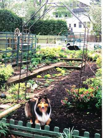 Gwennie in the Garden Emmaus PA Spring 2000 A.D. (After Dog)