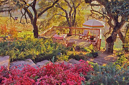 xeriscape garden under oaks