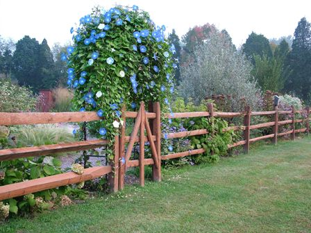 Split rail fencing gives pets a nice view of their