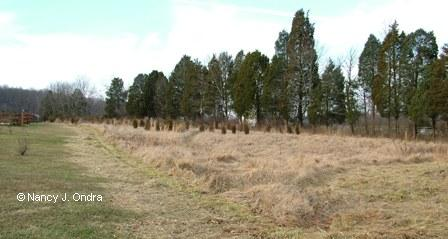 Lower meadow before mowing Jan 7 08