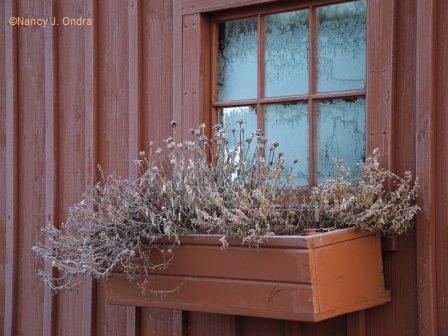 Windowbox in brown Feb 3 08