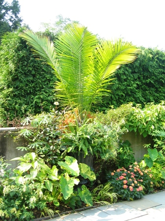 Garden Design with Over The Top Couture Container Gardening with Landscaping Ideas Front House from