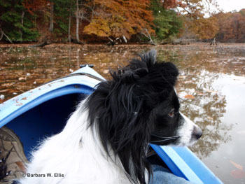 Bing, a rescue, is the smallest of my four dogs and best fit for a kayak.