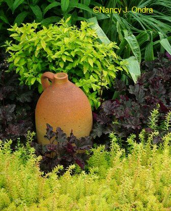 Sedum 'Angelina' with Heuchera 'Plum Pudding' and Caryopteris 'Jason'