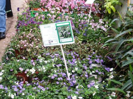 israel-11409-garden-center-nemessia-with-signage-resized