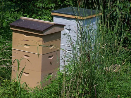 bee_hives