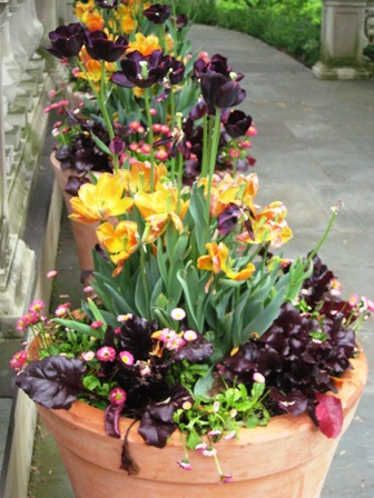 chanticleer-50909-repeating-spring-containers-of-tulips-at-front-entryway-resized