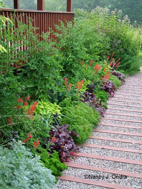 foundation-border-salvia-lir-beet-bb-parsley-tomatoes-july-19-07