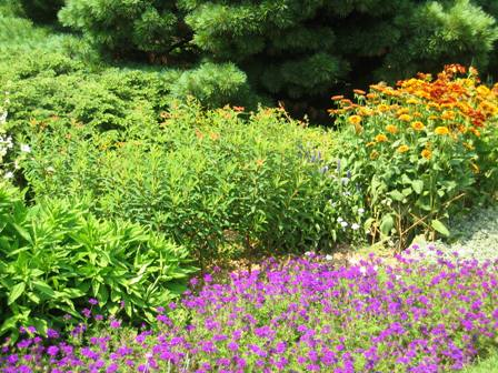 Jock Chrisite-Doe Run-verbena and euphorbia-orange flowers-resized