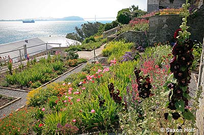 Gardens of Alcatraz – Update