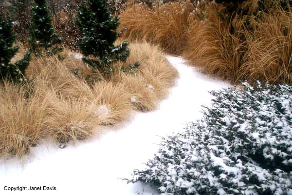 Beautiful Botany winter grasses combo
