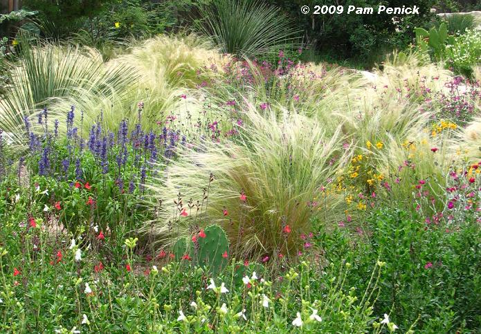 Ggw picture this photo contest winner for september for Large grasses for gardens