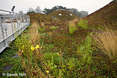 Native plant green roof by observation deck