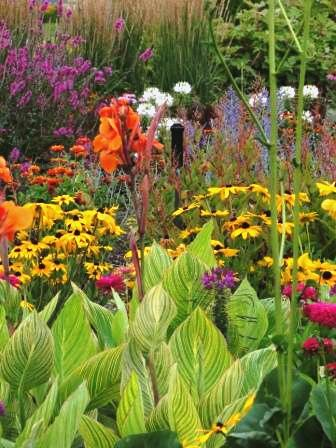 Dramatic variegated foliage of Canna 'Striata' pops in this seasonal display bed with Zinnia elegans 'Zowie Yellow Flame' and Z. elegans 'Uproar Rose', Rudeckia hirta 'Indian Summer', Persicaria polymorpha, Perovskia atriplicifolia, Cleome 'Spirit Frost' and Cleome 'Spirit Merlot', Lythrum virgatum 'Morden's Gleam' and Calamagrostis x acutiflora 'Karl Foerster' companions.