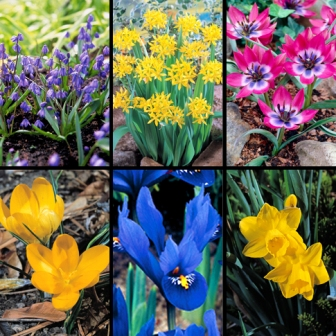 GGW-Bulbs[1].jpg-High Country Gardens-resized