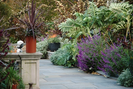 Chanticleer-melianthus, salvia and phormium.JPG-resized-square flagstone terrace