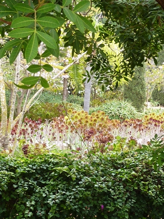 s Garden-aloes,aeoniums and bouganevillea-resized