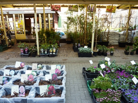 Flower Market in Amsterdam-bulbs and annuals on sidewalks in front of store-resized