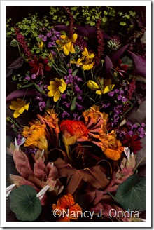 Bloom Scan Rich Colors June 29 2010