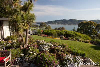 Tiburon garden with golden gate bridge