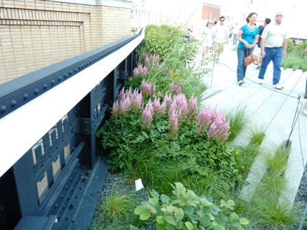 High Line Garden-planting near stairway and people walking on cement path-resized