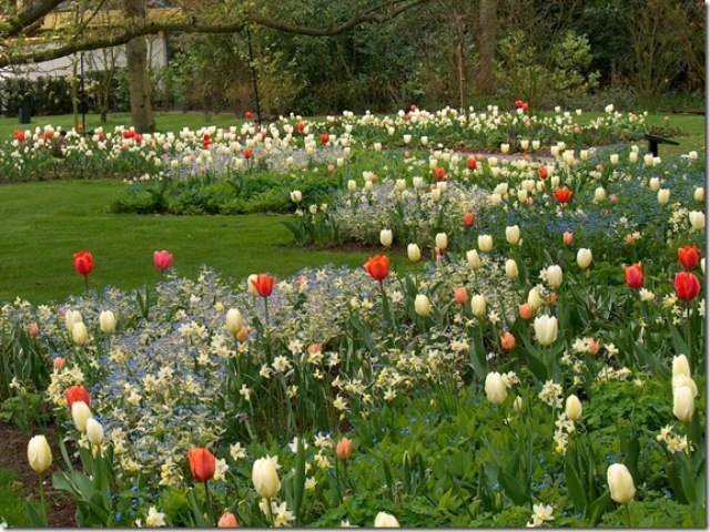 inspiration for fall bulb planting with jacqueline van der kloet