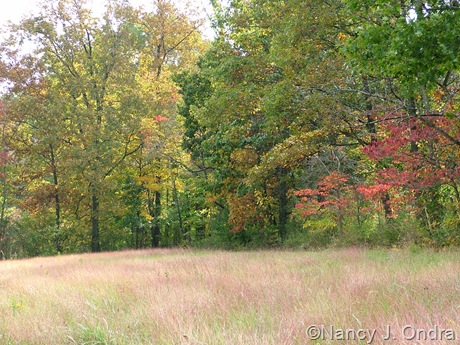 Meadow at farm Oct 11 10