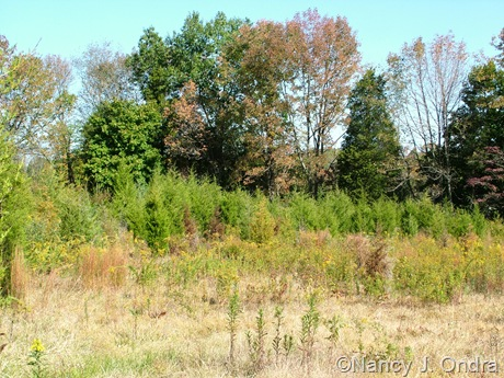 Meadow at Hayefield Oct 11 10