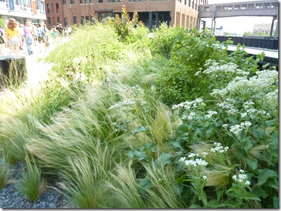 High Line Garden in NYC 013