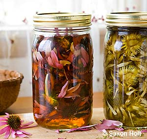 Preparing Echinacea herb tincture