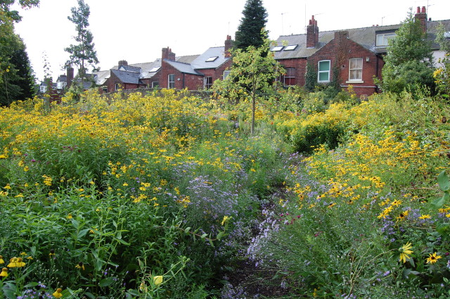 A prairie in the Sheffield Botanic Gardens, northern England, planted by Prof. James Hitchmough (the row of brick terraced houses proves its location) - it makes a great resource for butterflies.