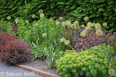 Chicago Botanic Garden border with Allium