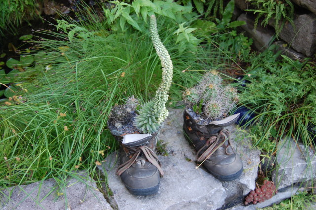 No point throwing out old boots if you can plant in them