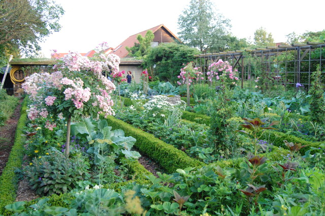 A wonderfully productive garden. The raised beds are supported by the box hedging, yes really!