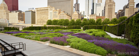Lurie garden in Milennium Park, Chicago