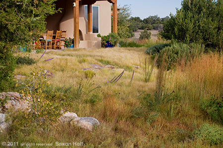 New Mexico Drought Tolerant Lawn, Buffalo Grass