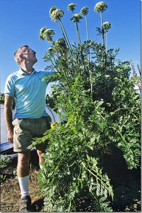 John Evans lives inthe Matanuska Valley near Anchorage and grows giant vegetables like this Guinness world record carrot that weighed 19 pounds.