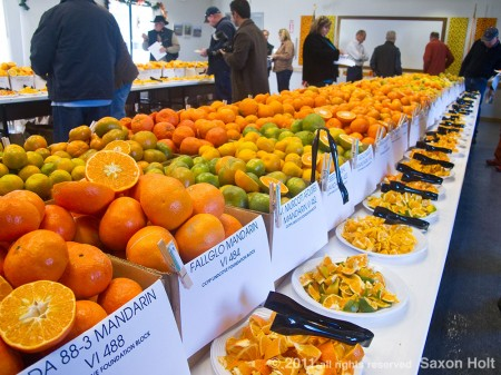 citrus tasting at Lindcove