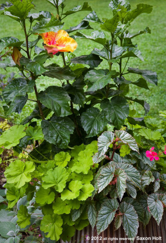 container with hibiscus 'The Path'