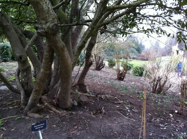 Taking out lower limbs gives you planting space beneath for shade tolerant perennials and can give shrubs more character