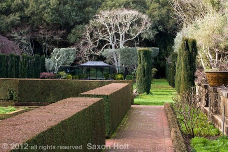 trees hedges, shrubs pruned in Filoli swimming pool garden north side