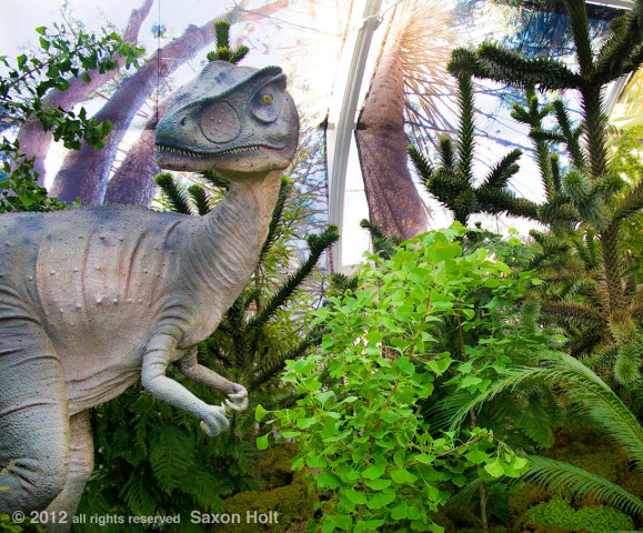 dinosaur in front of Araucaria photo