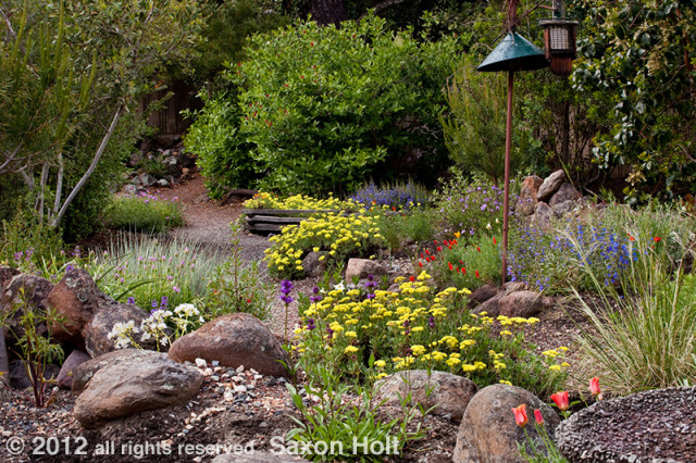 Kyte backyard California native plant garden