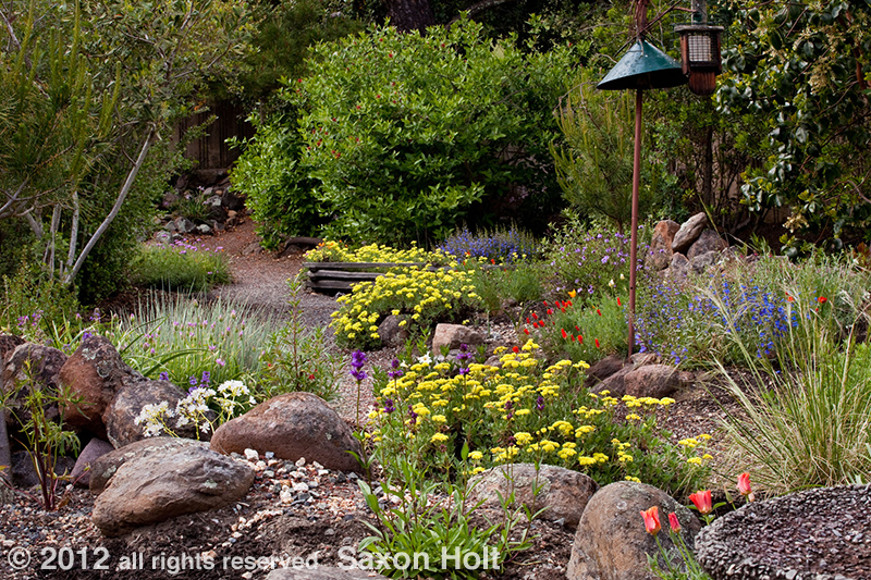 Kyte backyard california native plant garden for Backyard plant design ideas