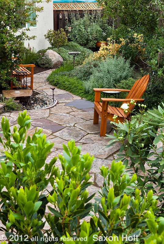 Wild Backyard Garden : path and patio backyard California native plant garden