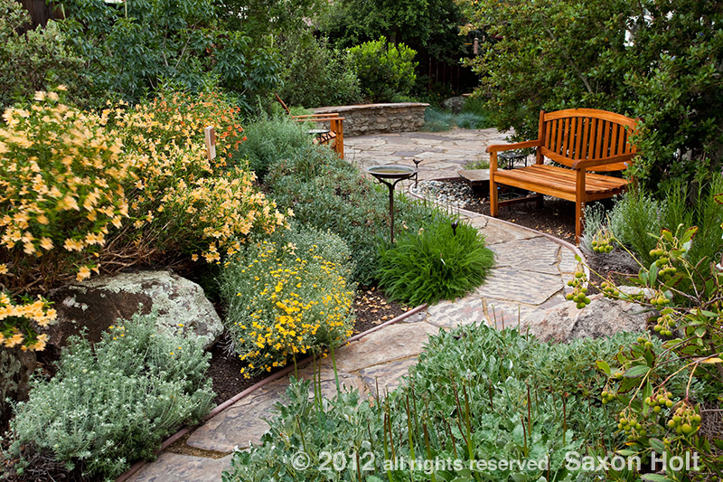 Path 1 california native plant garden for Native plant garden designs