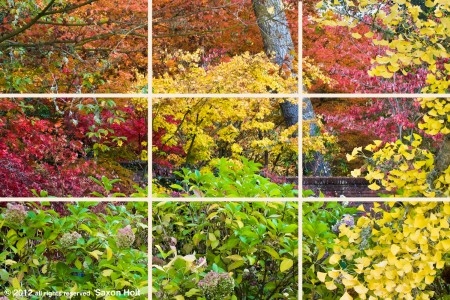 rule of thirds grid on fall tapestry photo